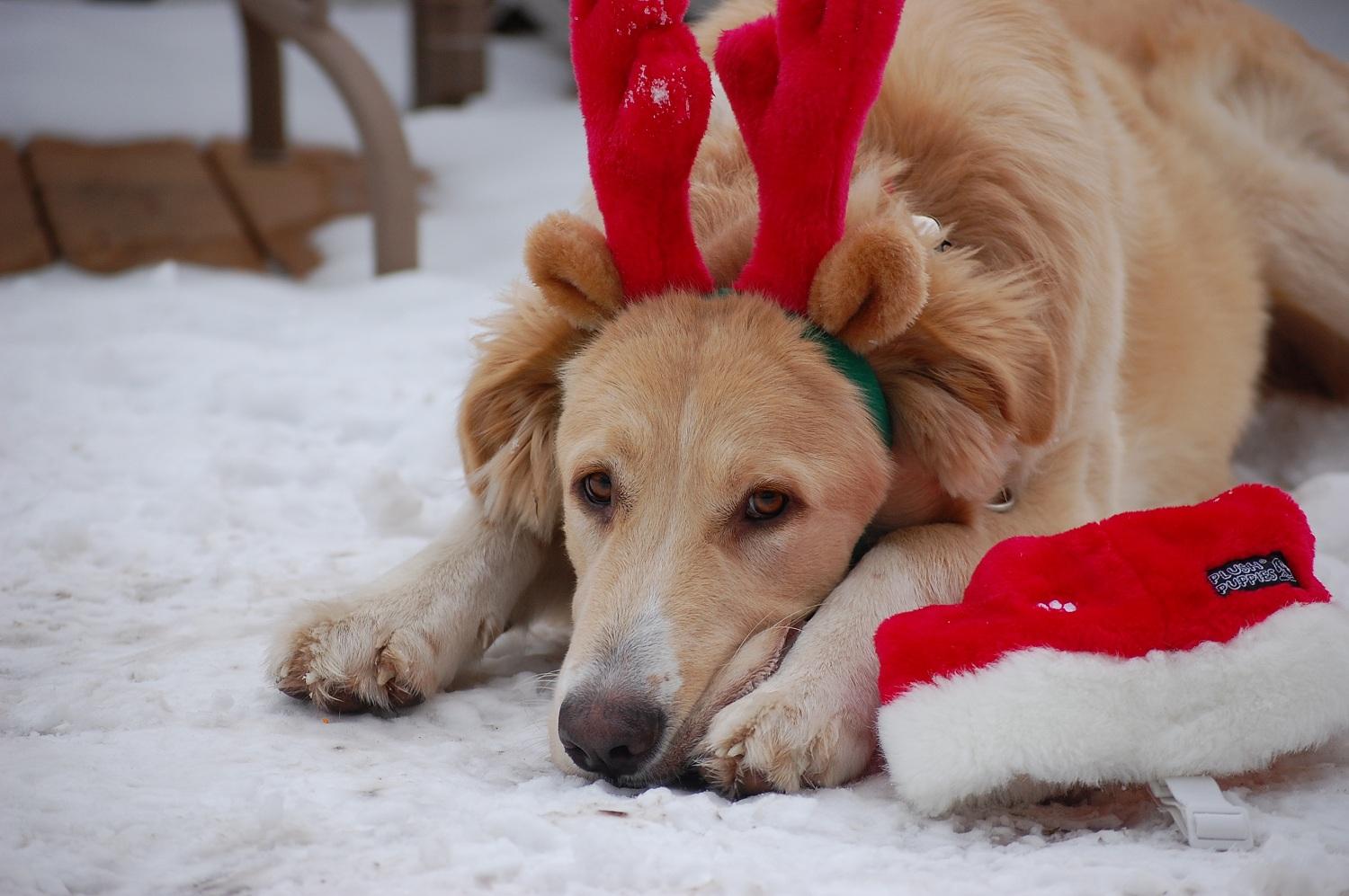 Christmas dog by sadieheart