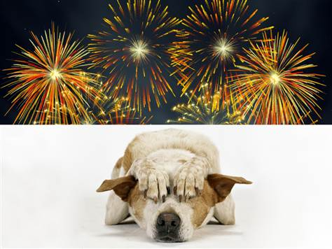 dogs-fireworks-4th-July-dogs-pet-expert-Steve-Dale-WGN-radio