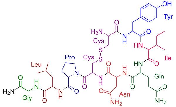 oksytocyna1