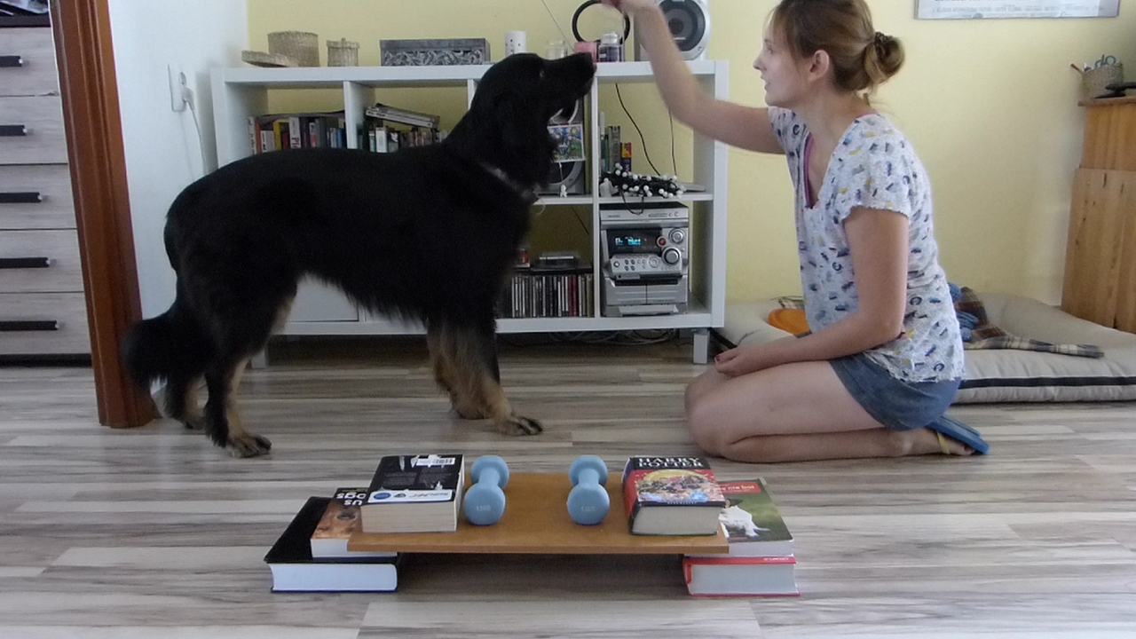 test-inteligencji-dla-psa