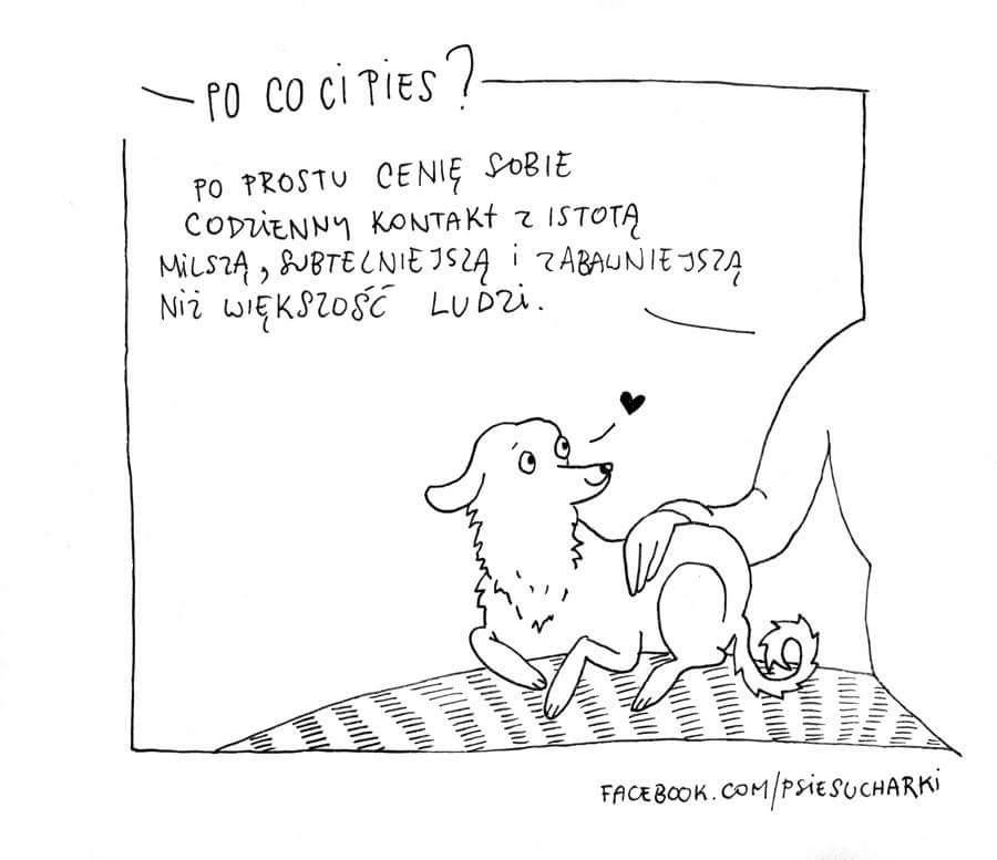 kupić psa